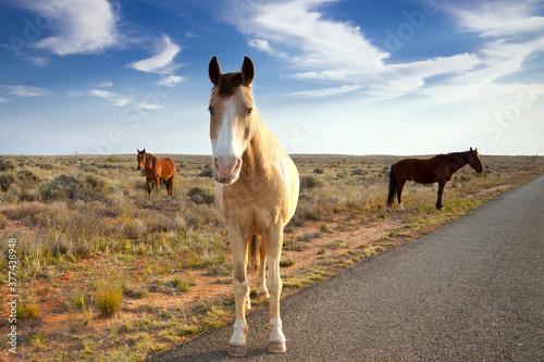 Photo Wild horses wander the roadside