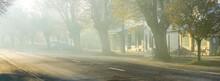 A Foggy Morning In The Tree Li...