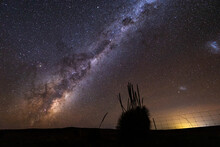 Grass Tree Silhouetted Against Milky Way