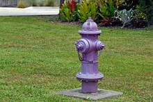 Purple Fire Hydrant
