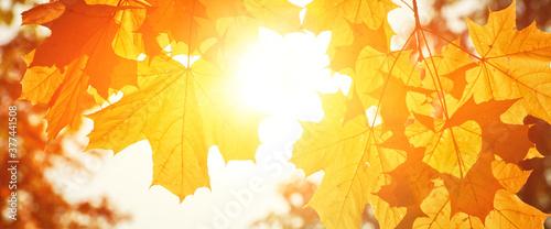 Goldener Herbst Canvas