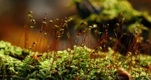 Plant Sprouts On Green Moss