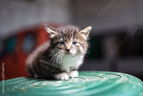 A small gray sick homeless kitten sits on an inverted plastic barrel Canvas