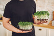Microgreen corundum coriander sprouts in male hands. Raw sprouts, microgreens, healthy eating concept.