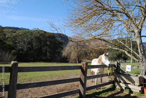 Fototapety, obrazy: The house riding in the Blue Mountains national park