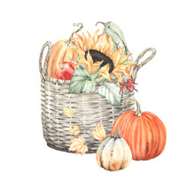 Watercolor Autumn Composition With Wicker Basket, Pumpkins, Sunflower, Apple And Colorful Leaves. Emblem Holiday Harvest, Thanksgiving Day Or Farm Market. Isolated Illustration On White Background.