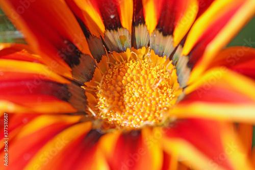 Fleur du jardin botanique de Roscoff Fototapete