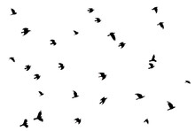 A Flock Of Crow Silhouette On ...