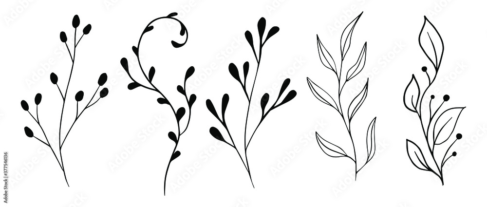 Fototapeta Vector branches and leaves. Hand drawn floral elements. Vintage botanical illustrations.Floral branch with berry.