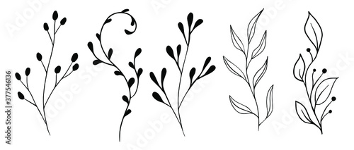 Vector branches and leaves Fototapet