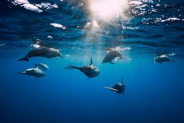 Dolphins underwater in blue tropical ocean.