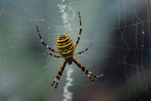 Large Striped Yellow And Black...