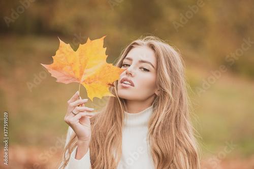 Obraz Fashion autumn portrait woman hides her face yellow maple leaves. - fototapety do salonu