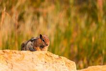 Crouching Chipmunk On A Rock Wall