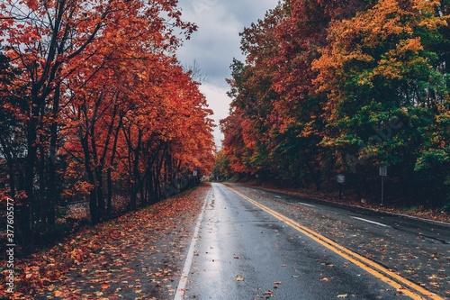 autumn in the park - 377605577