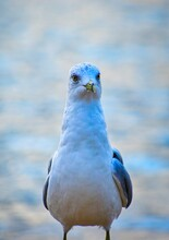 Portrait Of A Seagull On The B...