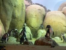 Penguins In Rock Area