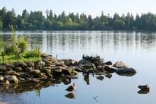 Lost Lagoon In Stanley Park Va...