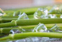 Green Frash Celery With Ice Ba...