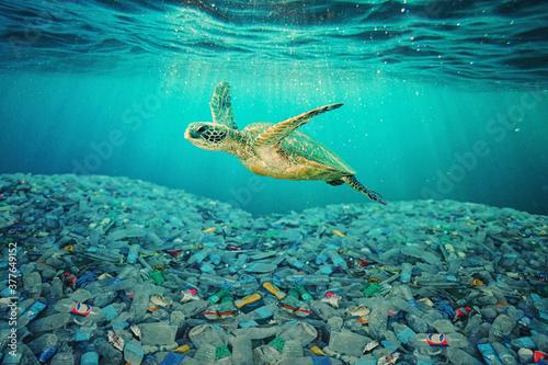 Obraz na plátne Sea turtle swimming in ocean invaded by plastic bottles