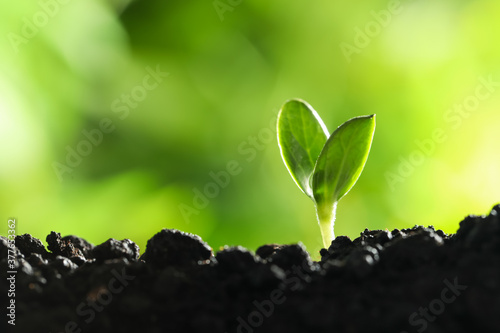 Photo Young vegetable seedling growing in soil outdoors, space for text