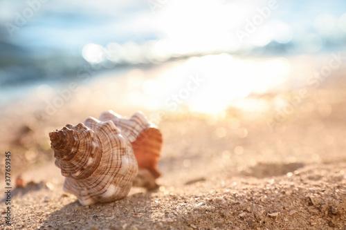 Fotografia Beautiful sea shell on sandy beach. Space for text