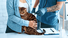 Animal Cardiology. Veterinaria...