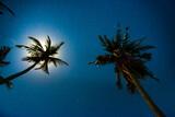 Fototapeta Kawa jest smaczna - Palm trees under dark blue night sky with full moon and many stars