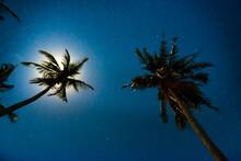Palm Trees Under Dark Blue Nig...