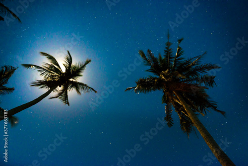Fototapeta Palm trees under dark blue night sky with full moon and many stars obraz