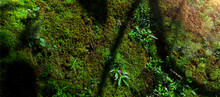Biodiversity In Rain Forest. Beautiful Green Moss On Floor With Plant Biodiversity In Rain Forest. Green Biodiversity In Nature And Beautiful Moss Collection, Cover Background.