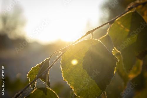 Tela Autumn morning