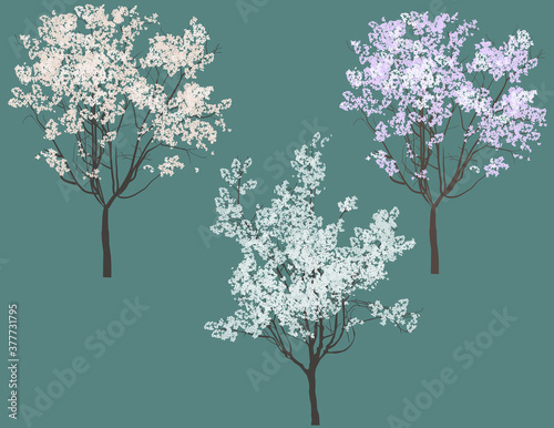 Papel de parede three light blossoming trees isolated on dark background