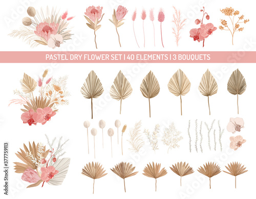 Elegant dry protea flowers, palm leaves, pale orchid, eucalyptus, dried tropical leaves, floral elements Canvas
