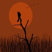 Black Crow On A Branch Silhoue...