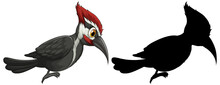 Woodpecker Characters And Its Silhouette On White Background