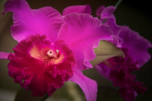Orchids Are One Of The Most Be...