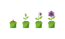Plant Growing Stages. Timeline Infographic Of Planting Tree Process