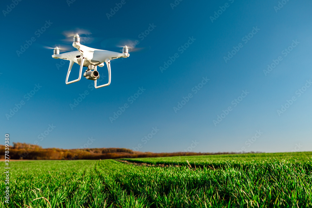 Fototapeta drone quad copter on green corn field