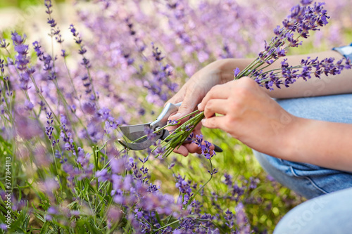 Obraz na plátně gardening, nature and people concept - young woman with pruner cutting and picki
