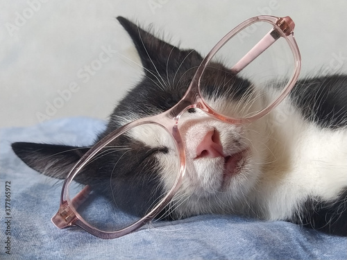 A young black and white cat in glasses with pink rims sleeps on a blue bedspread Fototapet