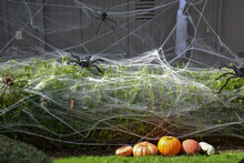Pumpkins And Spider Nets Decorating A Halloween Front Yard