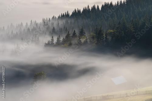 Fototapeta Autumn landscape of the foggy forest, at sunrise