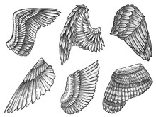 Sketch Wings. Hand Drawn Eagle...