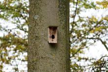 Closeup Shot Of A Birdhouse On A Trunk