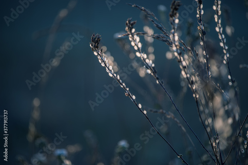 Dry dried flowers glowing in the sun on an autumn field. Soft selective focus.
