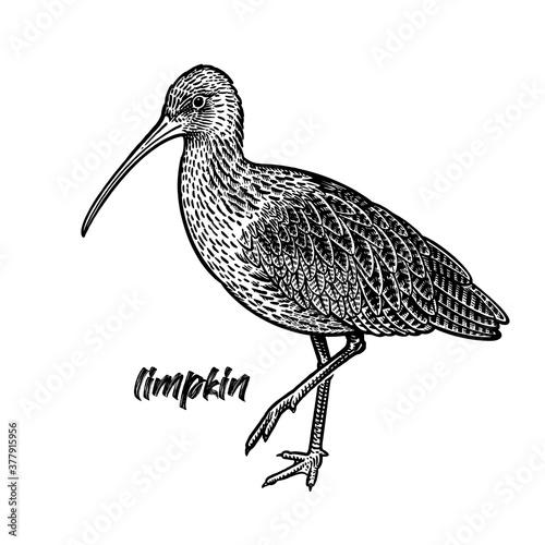 Canvas Print Ibis. Limpkin bird. Black and white.