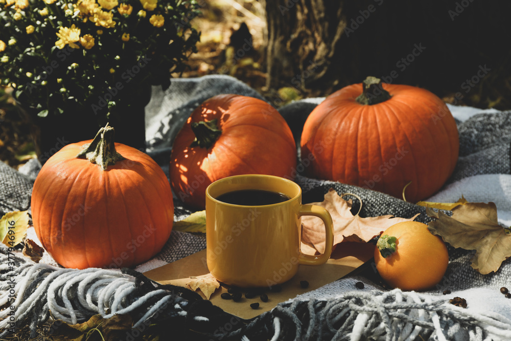 Obraz Cozy autumn concept with pumpkins and cup of coffee outdoor fototapeta, plakat