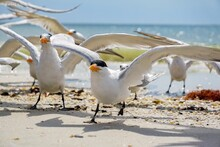 Seagulls Ready To Fly At Beach