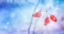 Winter Nature Background With ...